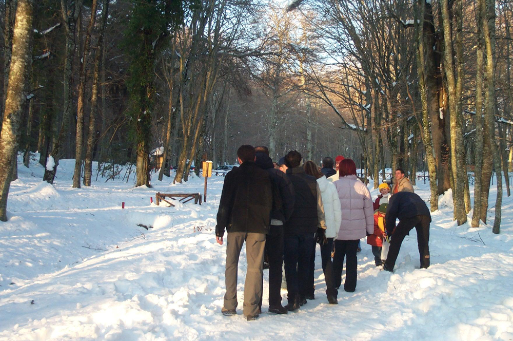 Neve in Foresta