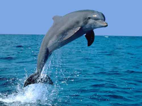 Delfinaio di peschici
